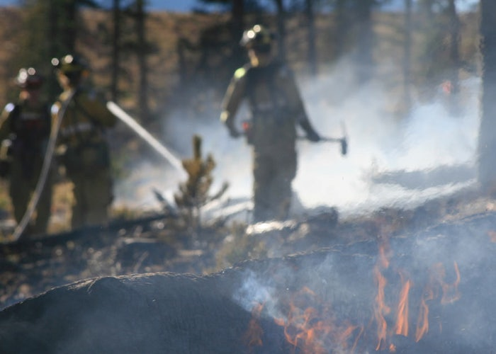 Read: How to Detox after Wildfire Smoke Inhalation (Healthy Tips)